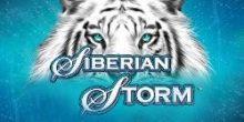 cum să faci bani Siberian Storm
